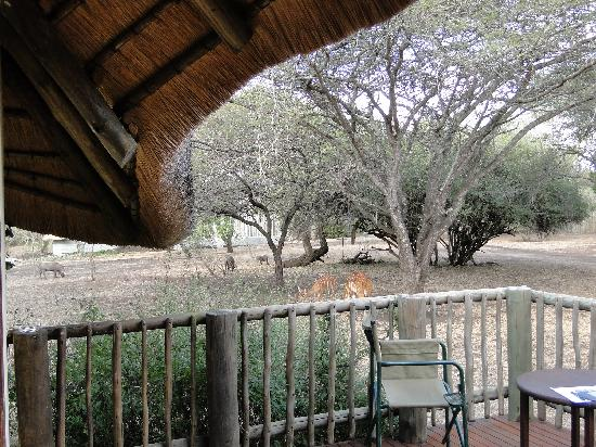 Rhino River Lodge: From our deck