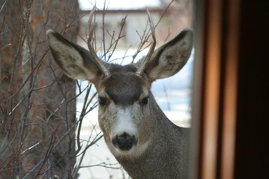 McGregor Mountain Lodge: Deer looking in my window