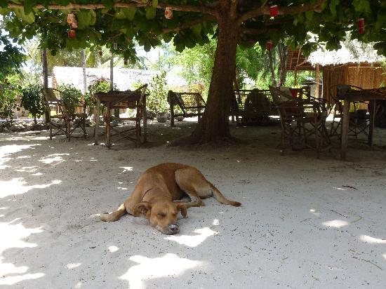 New Teddy's Place: alles ademt rust uit..
