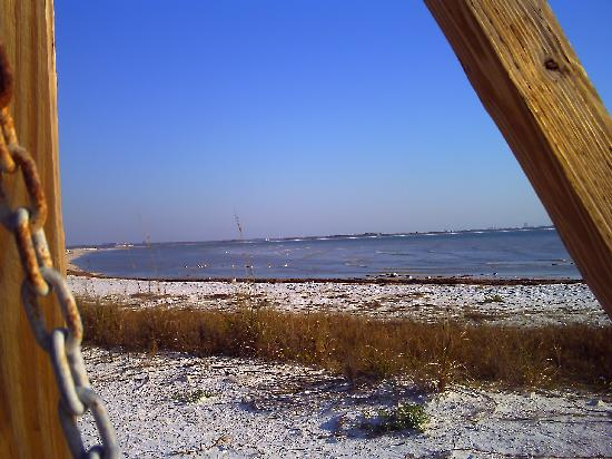Dunedin, FL: view from the swing
