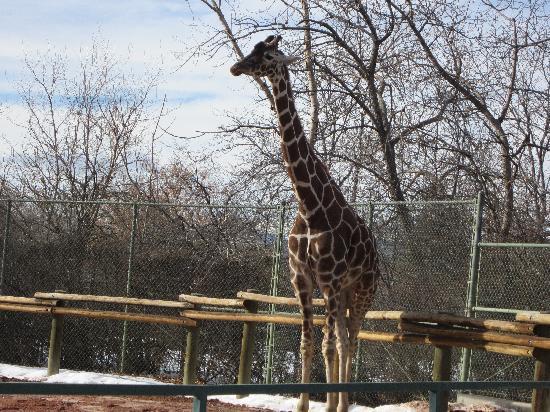 Denver Zoo: Outside?