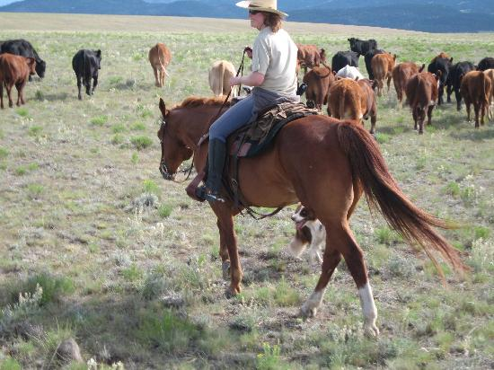 Badger Creek Ranch: Join our cowboy crew!