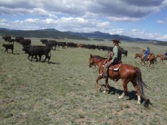 Badger Creek Ranch: Home, home on the range....