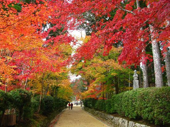 Koya-cho, Japan: 素晴らしい紅葉が楽しめます。