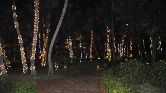 Iberostar Dominicana Hotel: une forêt de palmiers éclairées
