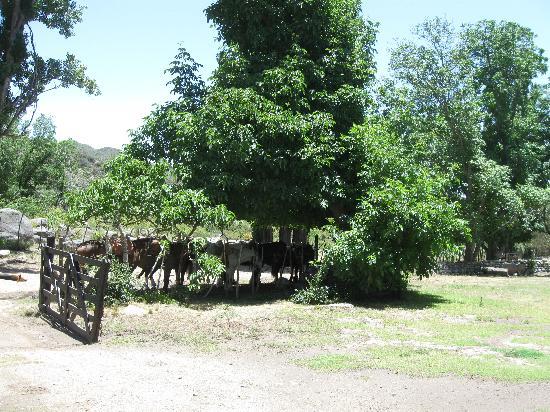 Estancia El Puesto : our horses
