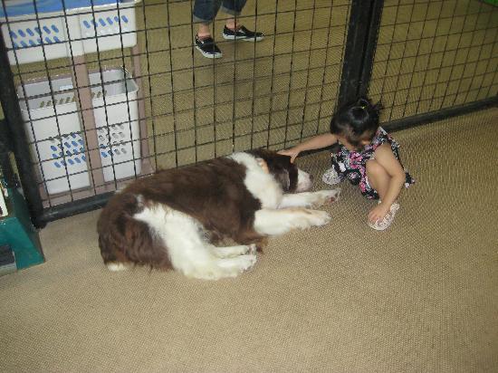 Cuddly Dominion: 犬とも触れ合います♪