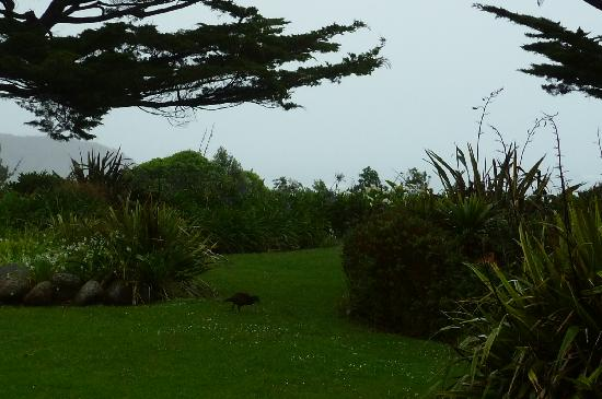 Steeples Cottage, Studio and B & B: a Weka in the garden