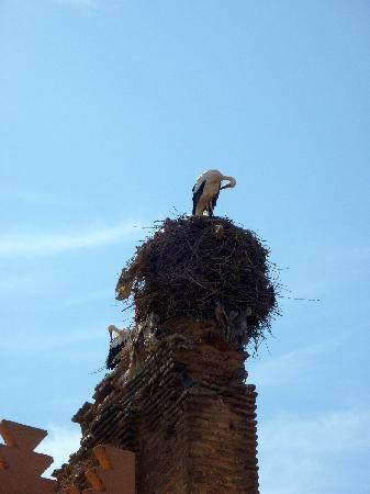 Cafe Terrasse Palais El Badia: les cigognes...