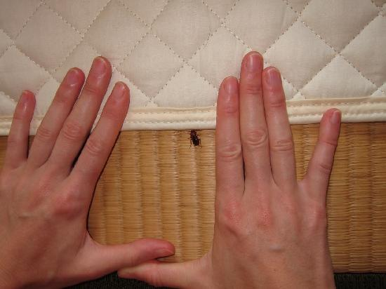 Kaigetsu: One of the roaches in our room