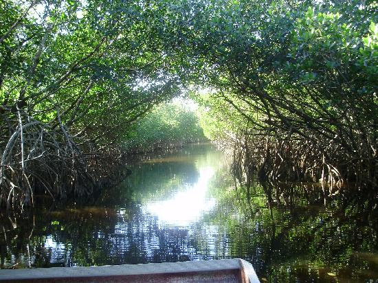 Everglades Adventure: Beautiful