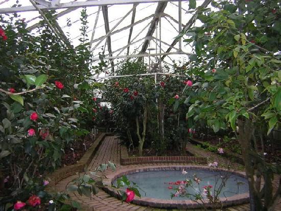 Massee Lane Gardens: Greenhouse Exhibit