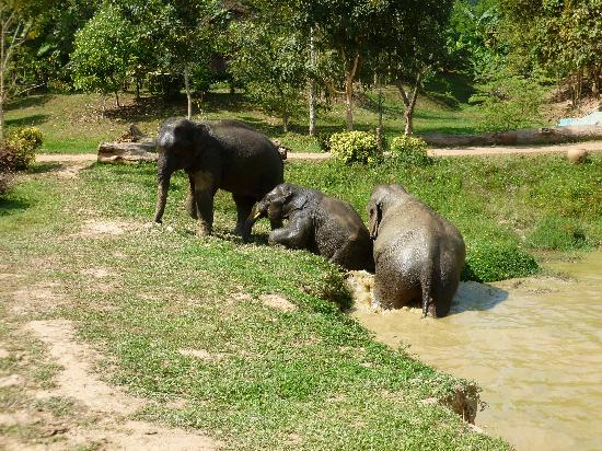 Boon Lott's Elephant Sanctuary : We are Cool Now