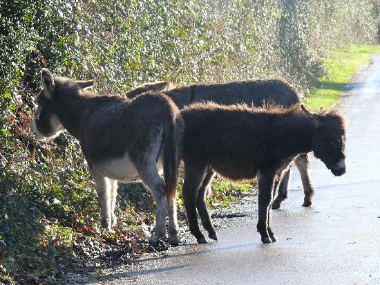 Kingfisher Retreat: Christmas Donkeys in the lane.....