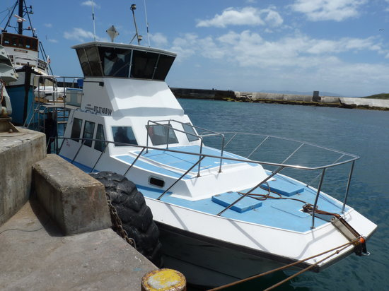 Ivanhoe Sea Safaris: The boat