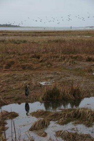 China Beach Retreat: Bird watching