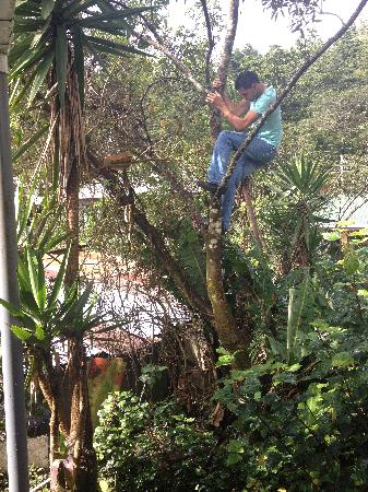Monteverde Backpackers: Alonso up a tree!