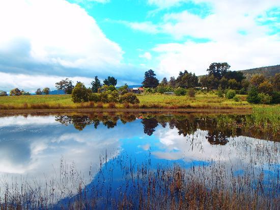 هامليت داونز كنتري أكوموديشن: The pond