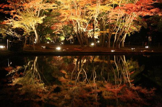 Sogi Park : もみじのライトアップ-①