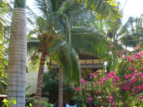 Puerto Escondido Surf House: garden eden