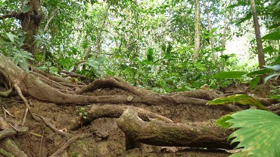 Cabinas Something Different: dans la jungle toute proche