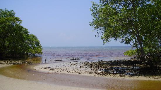 Hotel Puerto Beach: foto da quinta praia (mangue)