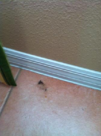 Summer Bay Orlando By Exploria Resorts : Dirt and dust upon arrival.  I guess housekeeping forgot to clean our unit