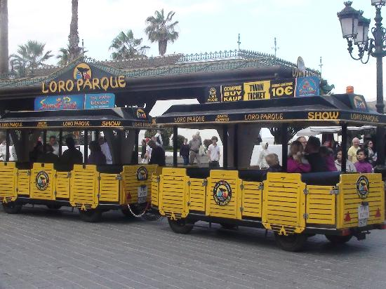 Be Live Adults Only Tenerife: free train to Loro Park