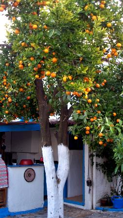 Amazon Antique: orange tree in the middle of the courtyard