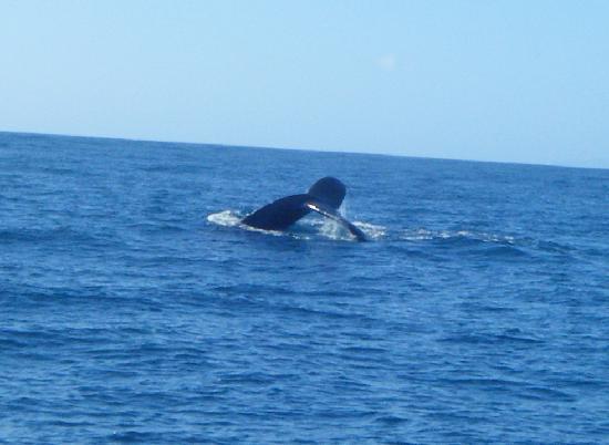 Catamaran Kahanu: whaletail