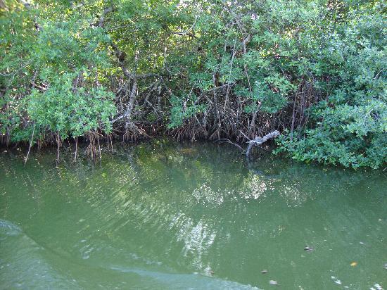 Decameron Los Delfines: Manglar