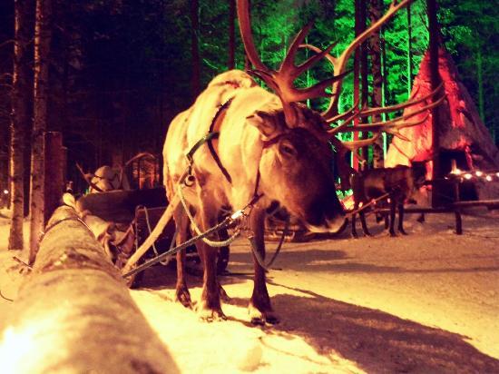 Santa Claus Village: Rentiergespann auf dem Gelände
