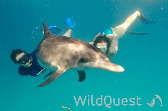 WildQuest照片