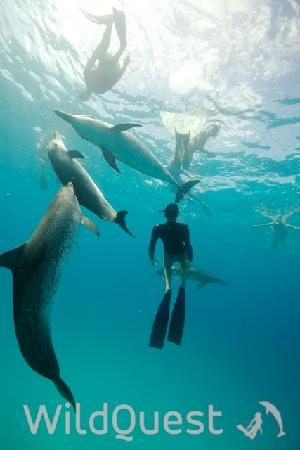 WildQuest: Swimming with the dolphins