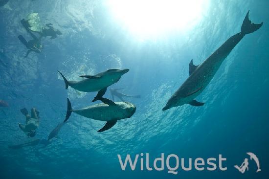 写真WildQuest枚