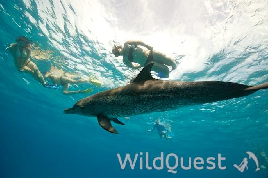 WildQuest 사진