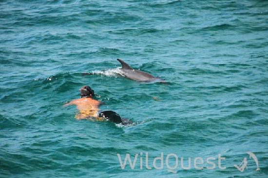 WildQuest : Swimming with the dolphins