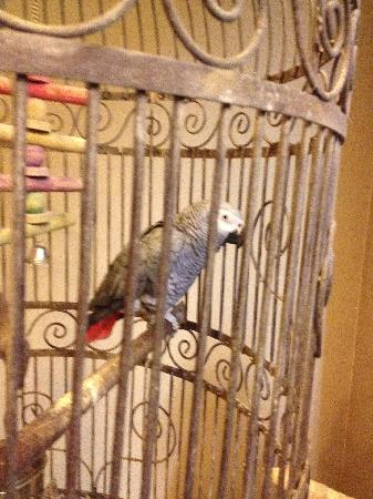 Hotel Acacia: The Resident Parrot