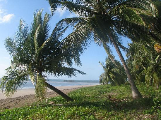 Xareu Beach: The combination of colors of the coconut trees, white hardpacked sand and the lagoon, wow!