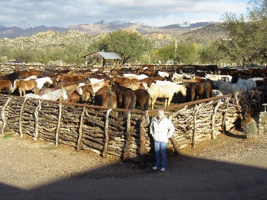 Tanque Verde Ranch: The corral