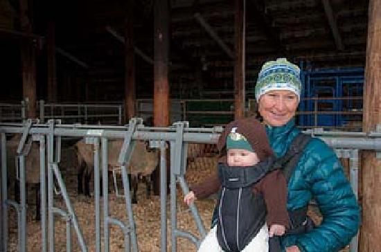 Guest Houses at Pineland Farms: We loved visiting the barns full of sheep!!  Photo by Wes Lowrie