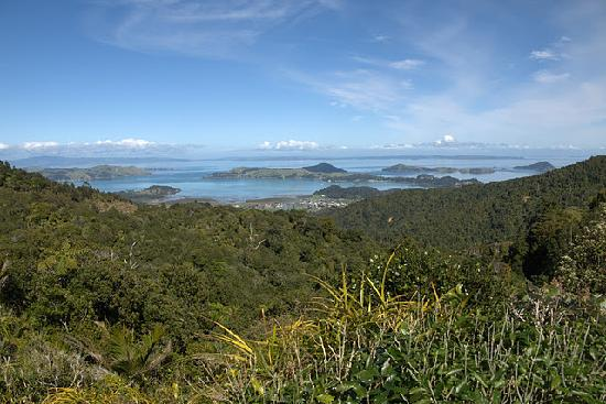 Coromandel Adventures - Day Tours : Capture the view and jump with joy at the top of the Coromandel Hills