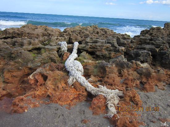 Jupiter Waterfront Inn: Coral Cove Beach exploring