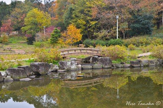 Odaka Green Foto