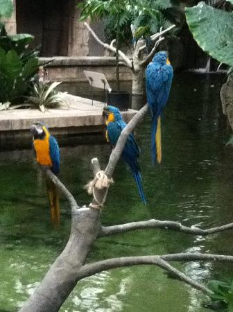 Moody Gardens Hotel Spa & Convention Center: The parrots in the Rainforest Pyramid
