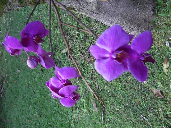 Lava Tree Tropic Inn: Orchid