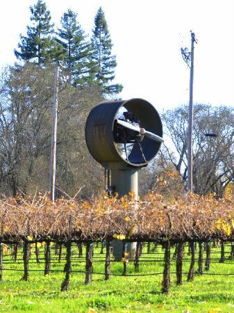 Grgich Hills Estate : ガーギッチ・ヒルズの扇風機