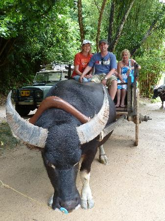 Chandara Resort and Spa: Water Buffalo ride.