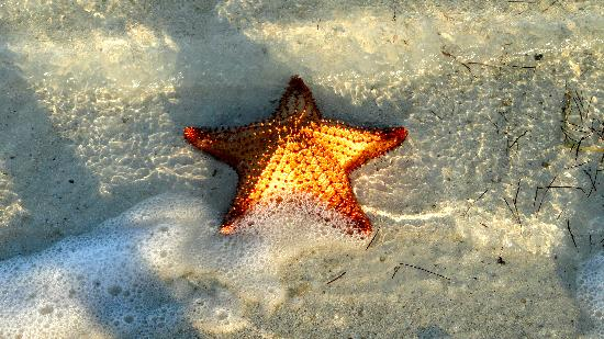 Beautiful starfish at half moon bay picture of silver for Deep sea fishing half moon bay
