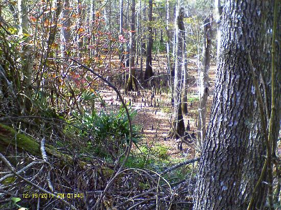 Florida Caverns State Park: A view from the trail